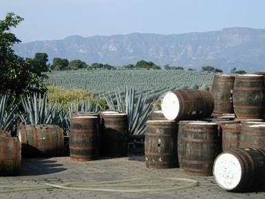 Производство мексиканской текилы