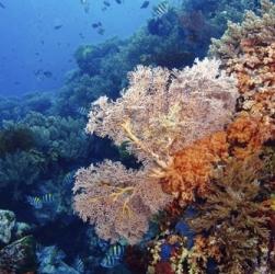 Национальный парк «Риф Скорпиона»
